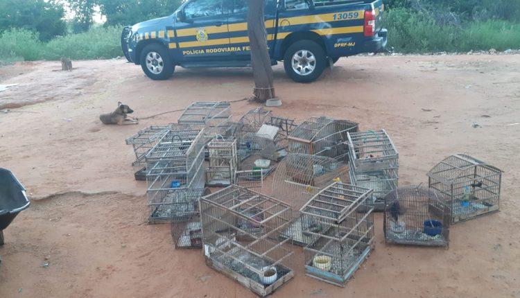 Secretaria de Meio Ambiente e Polícia Rodoviária Federal libertam pássaros em Reserva Ambiental